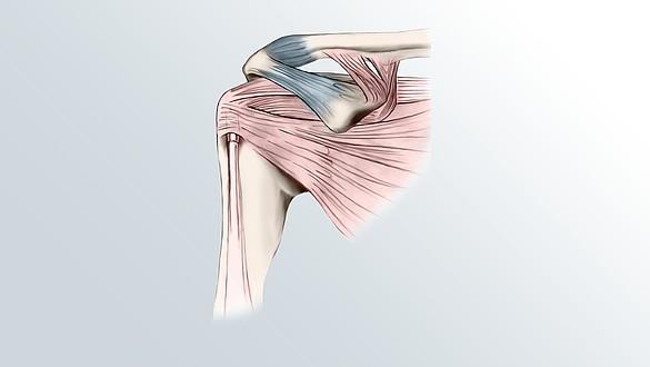 Articulation de l'épaule - Articulation de l'épaule